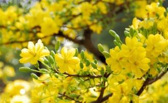 Những loài hoa hay chưng vào dịp Tết và ý nghĩa của những loài hoa này